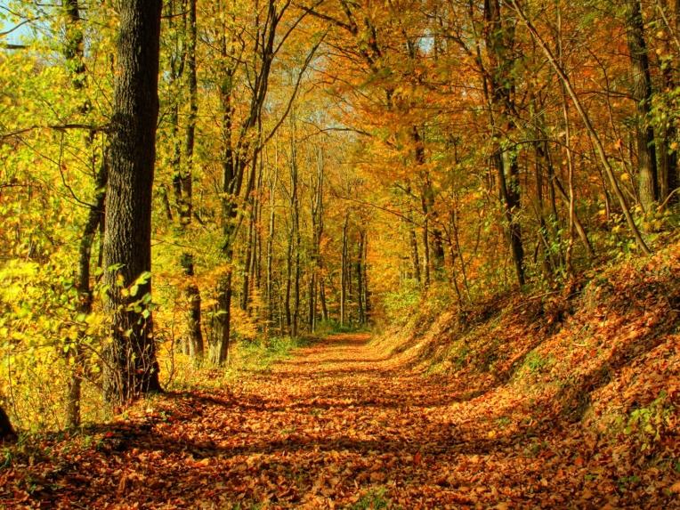 automne052