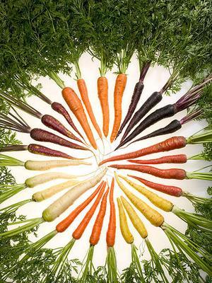 osso bucco de carottes
